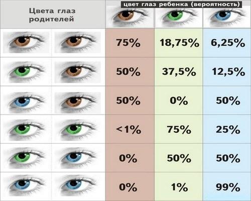 Вероятность цвета глаз у ребенка
