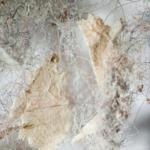 Пыль и шерсть
