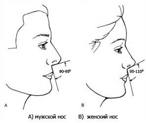 Угол носа