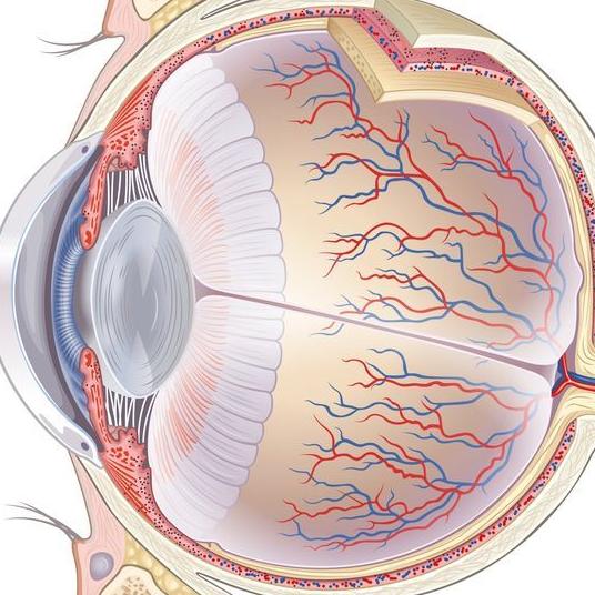 Сосуды глаза