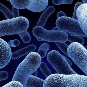 Разновидности бактерий